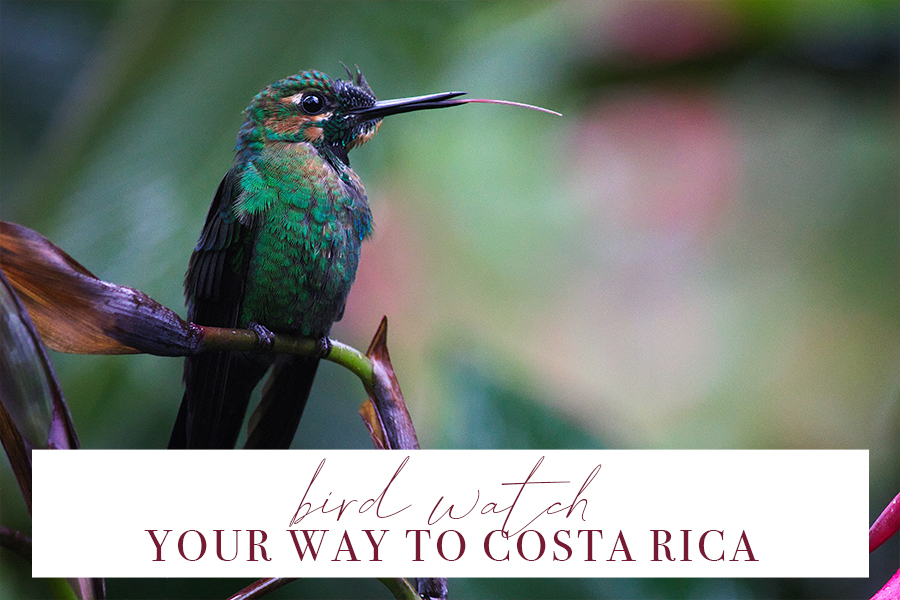 Travel Blog - Birdwatch Your Way to Costa Rica