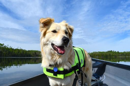 Dog in a Boat on a Lake in Northern Minnesota